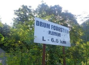 Valea_Floreiului_Florei