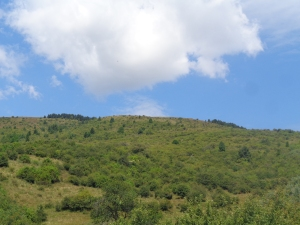 Muntele_Florei2